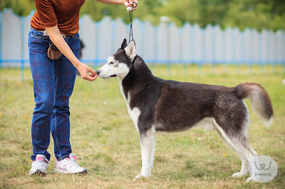 ΓΙΑΝΝΕΝΑ- Η Λαίδη και ο Αλήτης σας προσκαλούν, στην Ενημερωτική Ημερίδα με θέμα: «Μαθαίνω το σκύλο μου»
