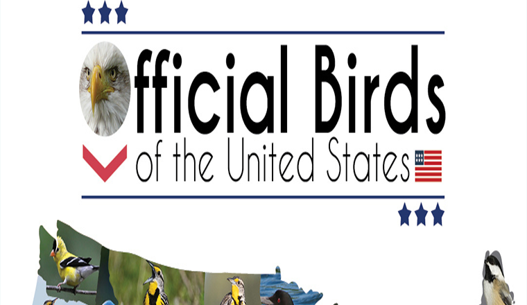 Official Birds of the United States #infographic