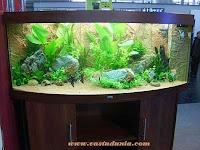 vastu,aquarium,images