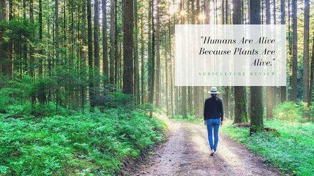 quote on plants