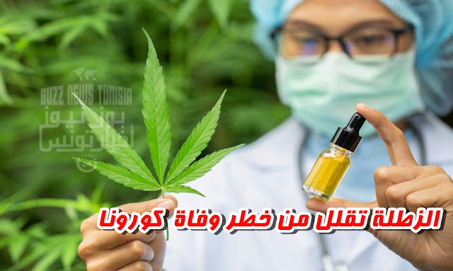 """Zatla"" Cannabis extracts may reduce the risk of dying from Covid-19"
