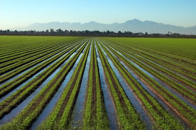 PM Krishi Sinchai Yojana | PMKSY Scheme | प्रधानमंत्री कृषि सिंचाई योजना