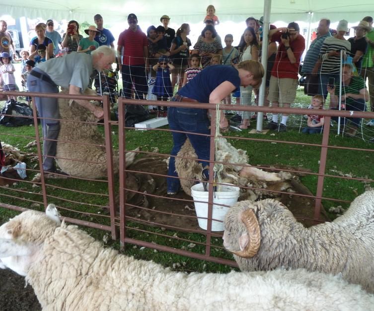 manual sheep shears for sale