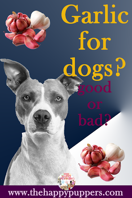 Garlic in dogs: debunking the myths
