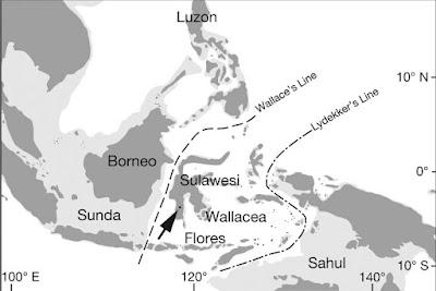 Pengertian Garis Wallace dan Lydekker di Peta