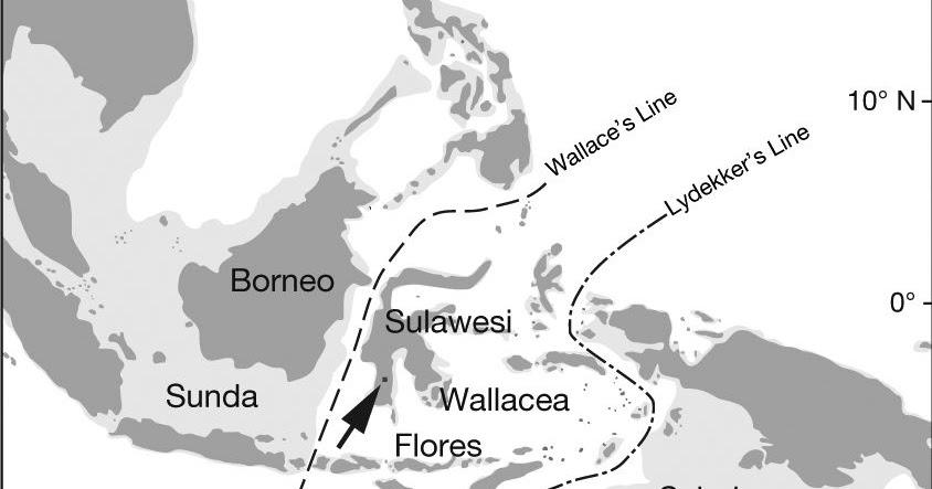 Pengertian Garis Wallace Dan Lydekker Di Peta Gurugeografi Id