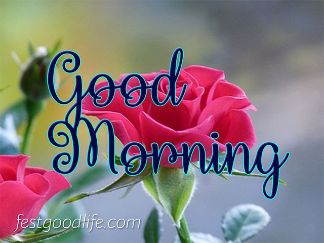 cute good morning image  with rose download free