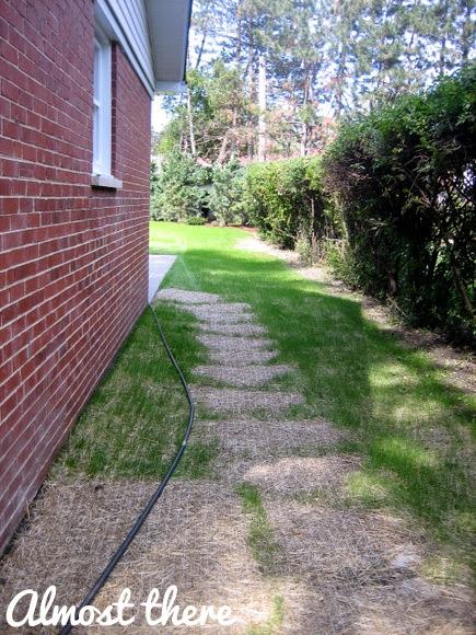 grass progress