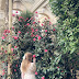 An orangery of camellia