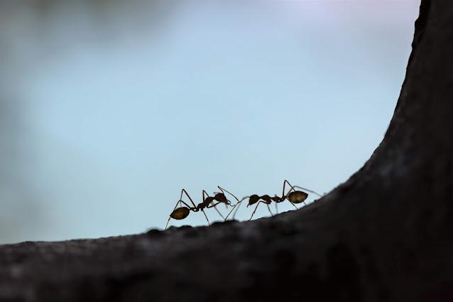infestation, ants, Raid, funny story by Randi Lynn Mrvos