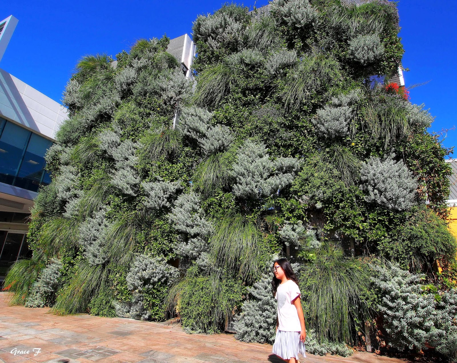 Perth Daily Photo : Vertical Gardens.. Natural Tapestries