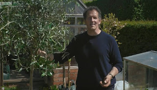 Monty with Olive Tree