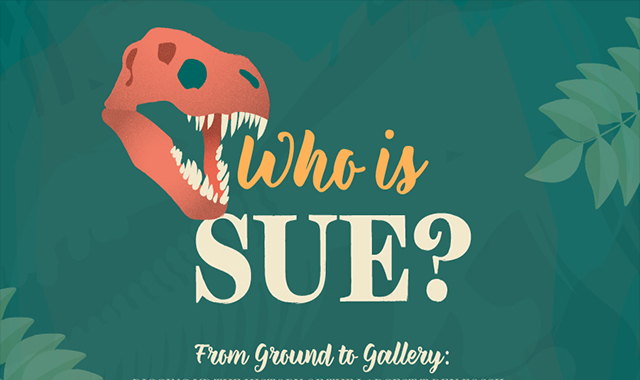 Who's the Sue? South Dakota's largest dino #infographic
