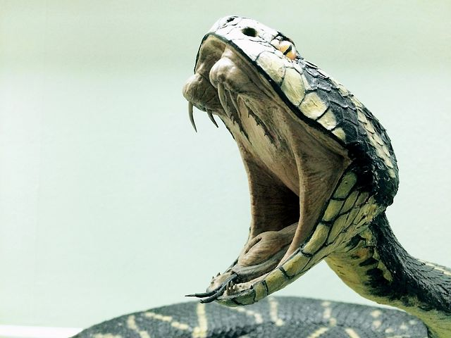 18 Scary Facts That We Probably Do Not Know About Snakes