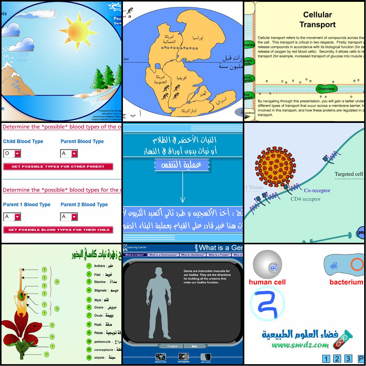 البيولوجيا الجزيئية فتحي محمد عبد التواب pdf