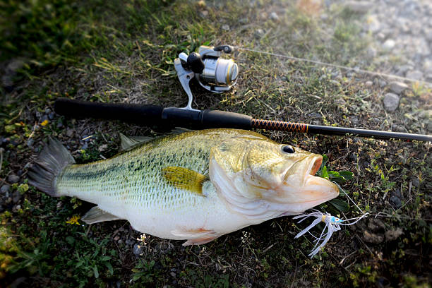 Best Bass Fishing Lures – To Land Your Next Catch