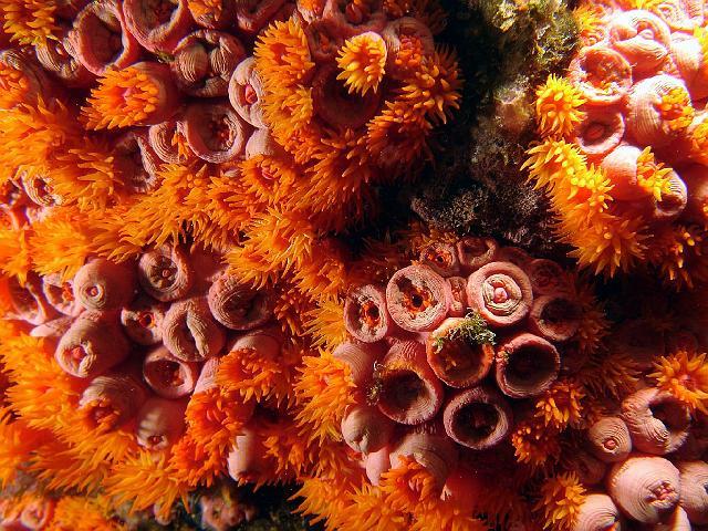 Danos Ambientais Causados aos Corais