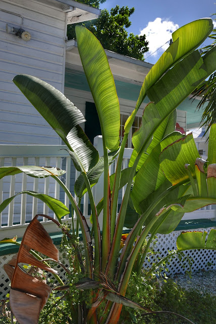 Florida Keys Flora