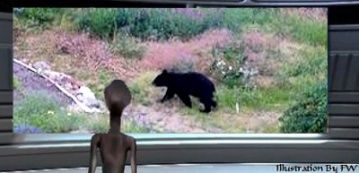 Bears React to UFOs