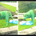 Miscreants Ruin Dog With Green Paint, Canine Found Crying & Looking For Food