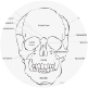 A diagram of the skull.