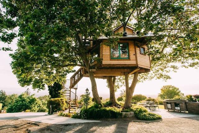 Saya dan saudara lelaki aku membangun yang cukup janky di hutan di belakang rumah kami k Rumah Pohon Airbnb Yang Menakjubkan