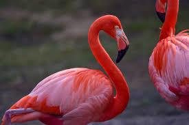 Satu Ekor Rp.1 Miliar, Inilah 5 Burung Termahal di Dunia
