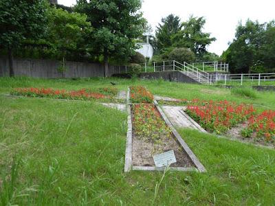 花博記念公園鶴見緑地 サルビア 花壇