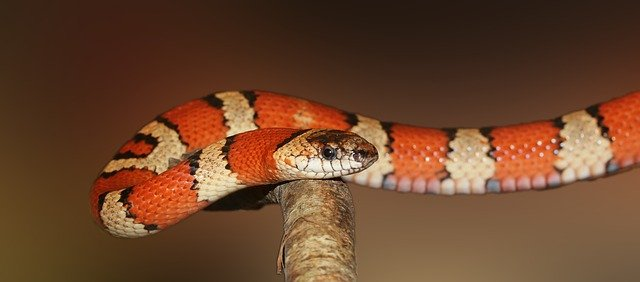 Information & Facts About Snakes In Hindi You Didn't Know