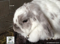 View images of rabbits for adoption