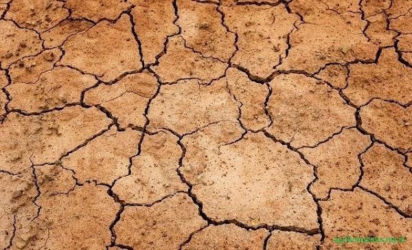 Peranan Bakteri Dalam Pembentukan Tanah