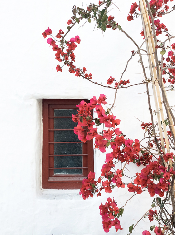 Red window and bougainvillea in Mykonos. Greek minimalism. Photo by Eleni Psyllaki @myparadissi