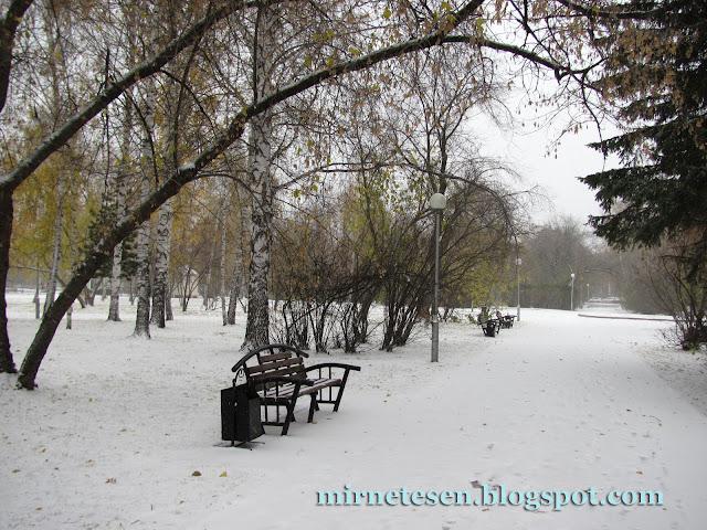 снег и жёлтые листья