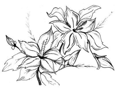 Lindos Beija Flor Em Lindas Flores Desenhos Preto E Branco
