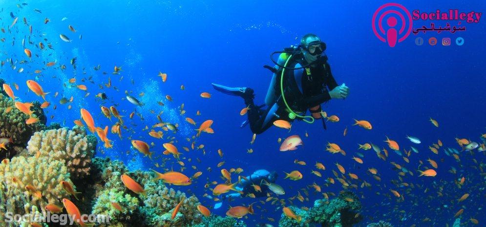 الغوص ام السباحة .. تعرف على تاريخ الغوص