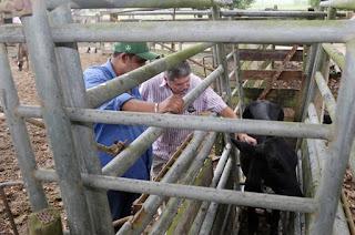 http://vnoticia.com.br/noticia/4121-aberta-a-segunda-etapa-da-campanha-de-vacinacao-contra-a-febre-aftosa-em-sfi