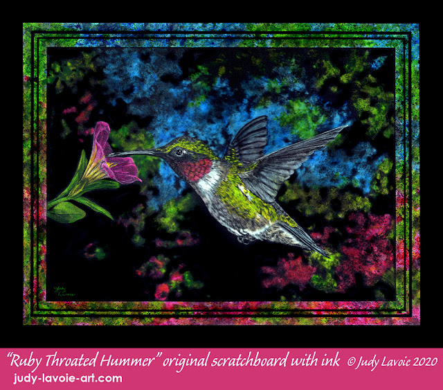 Ruby Throated Hummer, original Scratchbord with ink © Judy Lavoie 2020