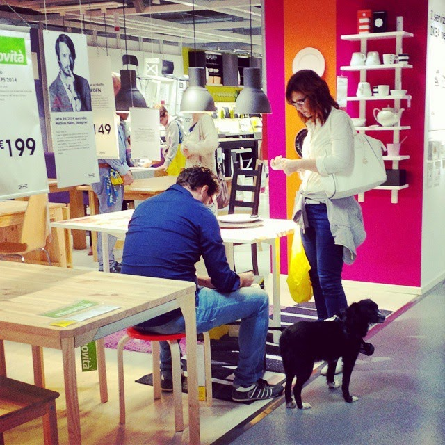 A dog is patiently waiting for his humans in Ikea
