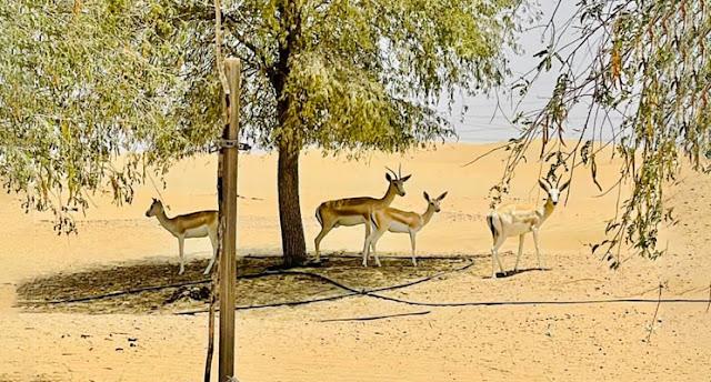 Wildlife at Love Lake Dubai