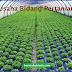Rahasia Rincian Biaya Modal Usaha Pertanian Dari Awal Sampai Buka