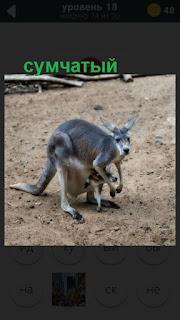 кенгуру сумчатый с детенышем стоит на 18 уровне 470 слов
