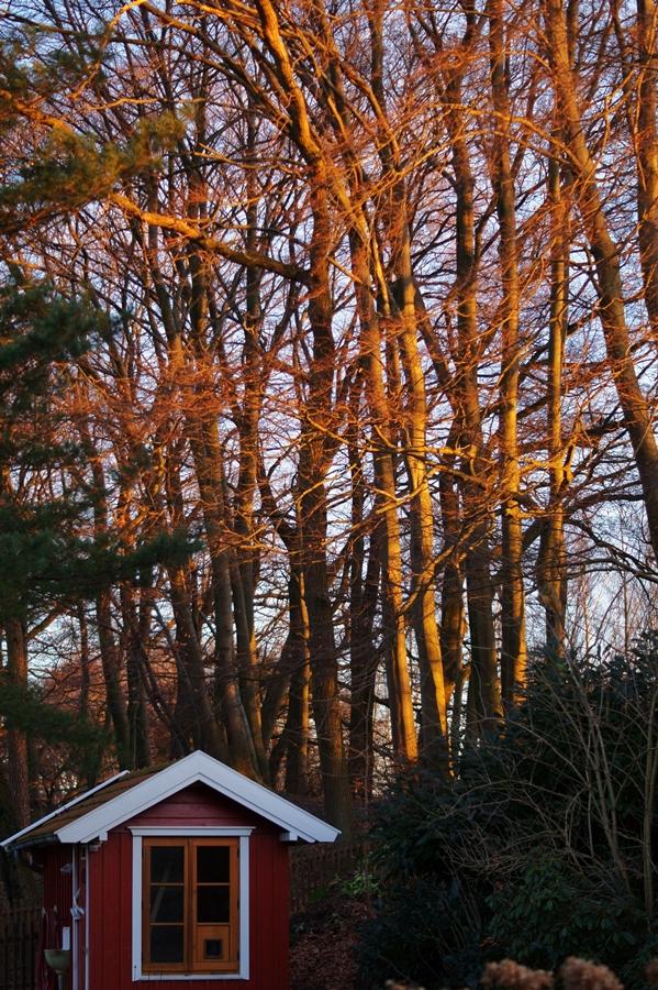 Blog + Fotografie by it's me! - Instatreffen bei Katies Home - Hühnhaus und tiefstehende Sonne in Bäumen