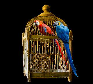 tips jual sangkar burung onlin