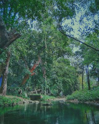 kelestarian hutan