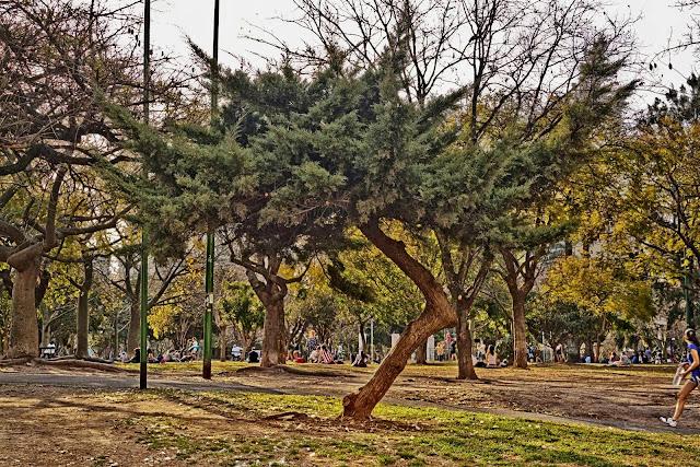 Arbusto con raro tronco.