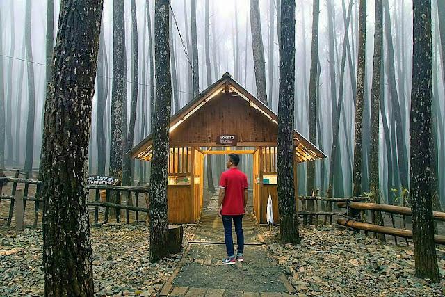 Lokasi Wisata Hutan Pinus Mangunan Jogja