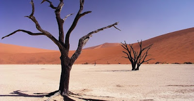 Two dead trees in the desert sand