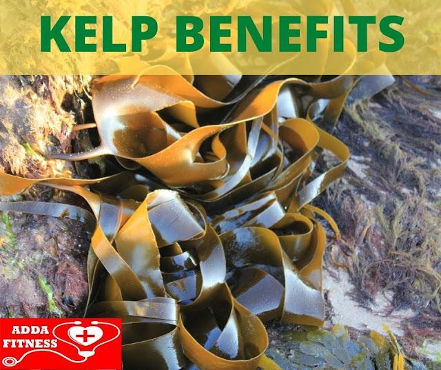 Top 3 Health Benefits of Kelp