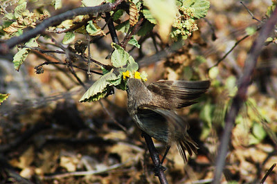 To claim that the misnamed Galápagos vampire finch is proof of evolution. Instead, it is fake news and bad science used to attack the Creator.
