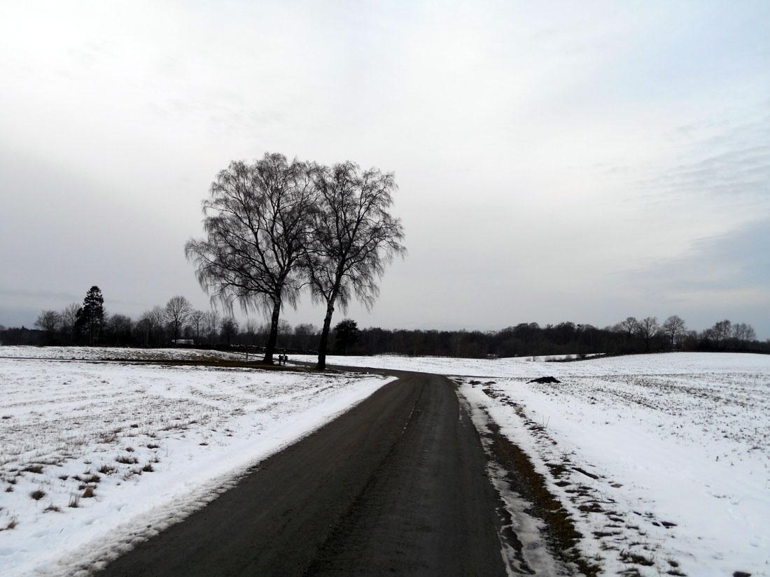 La strada verso il bosco